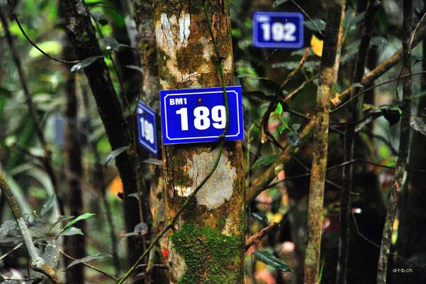 Vietnam.Bach Ma N.P. Schilderwald