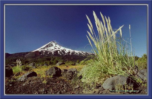 25.P.N. Conguillio und Vulkan Llaima,Chile