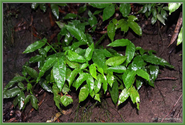 JM050.Feuchte Blätter