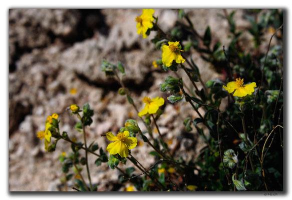 TR0744.Göreme.Blumen