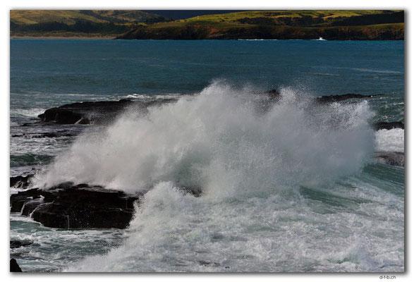 NZ0915.Curio Bay,Wave
