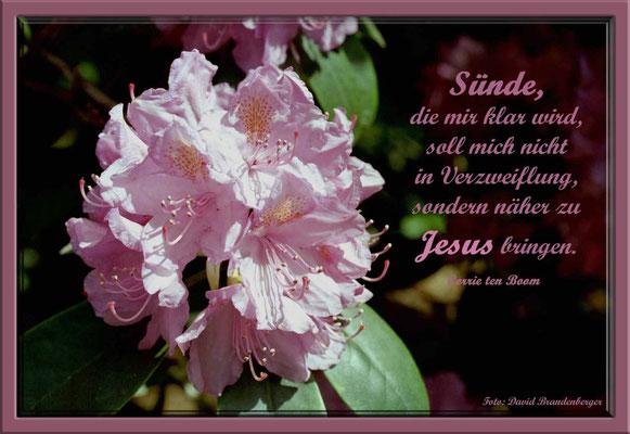 S0086.Rhododendron.Bremen,DE.Text: Corrie Ten Boom