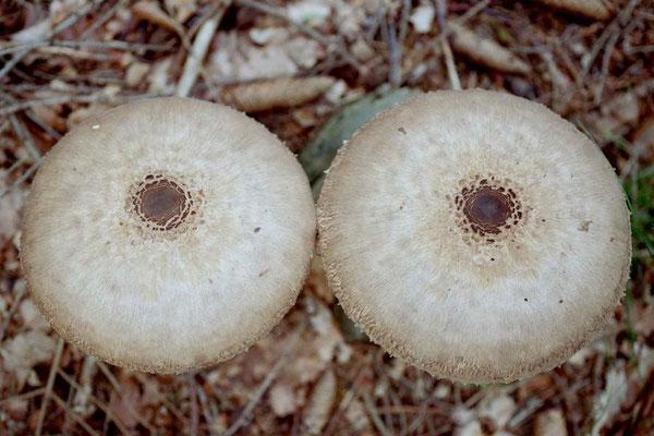 Was denkt Mann dabei, beim Pilze suchen?