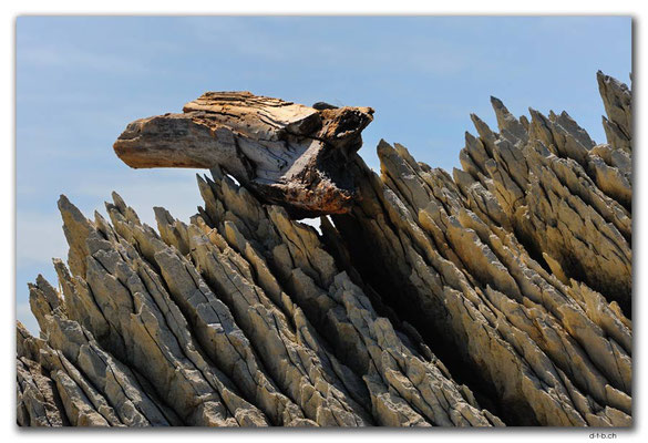 NZ0701.Kaikoura.Driftwood and rocks