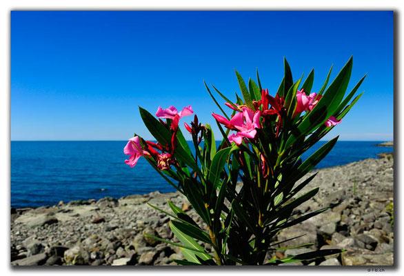 TR0986.Arhavi.Blumen