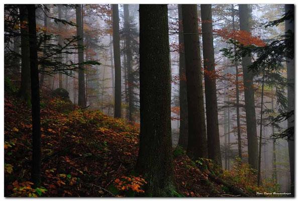 A0752.Wald.Creux du Van.CH