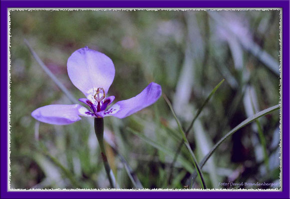 A0232.Blume.Gruta Helechos.UY