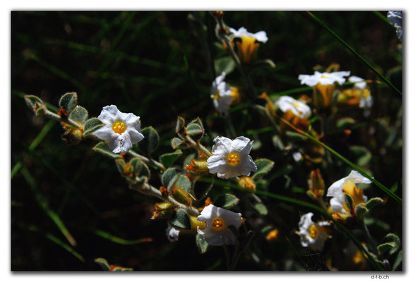 AU0354.Blume
