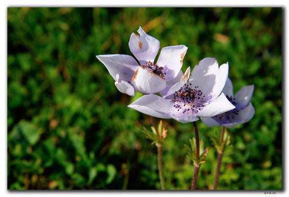 GR0546.Malia.Blumen