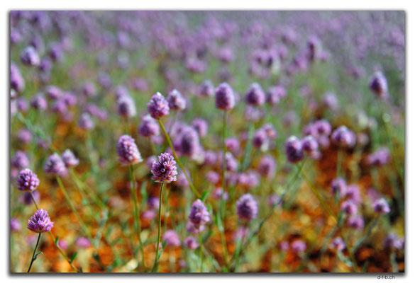AU0356.Blumen