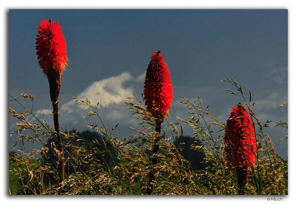 NZ0358.Mt.Taranaki