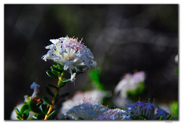 AU0568.Grigsons Lookout.Blume