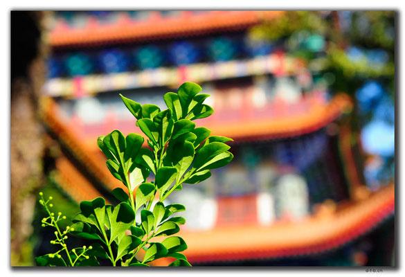HK0023.Big Buddha Monastery