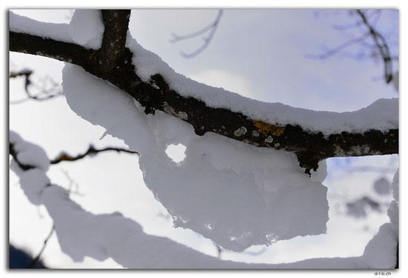 GW0010.Schnee am Ast