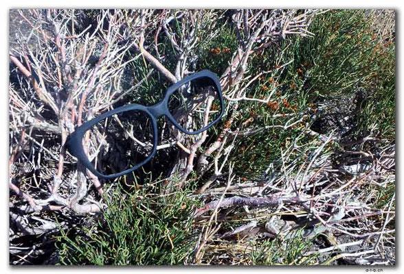 CN0056.Brille im Gebüsch