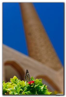 Esfahan, Schmetterling