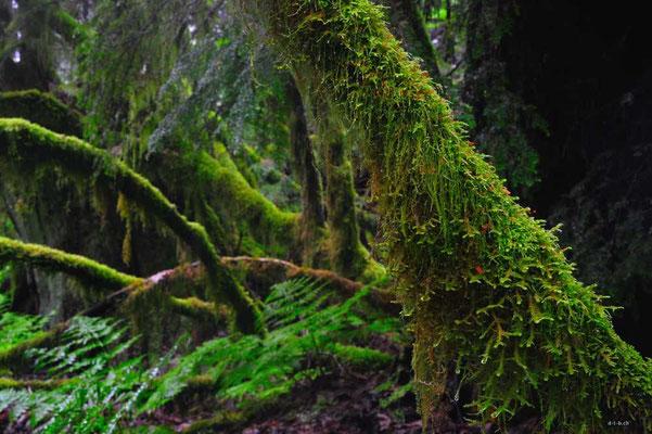 CA0140 Squamish Regenwald