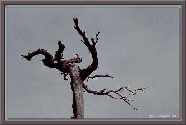 149.Baum,P.N.Torres del Paine,Chile