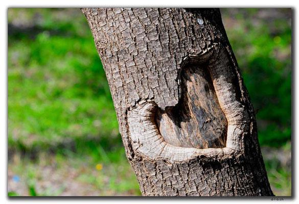 TR0288.Antalya.Uni.Herz im Baum
