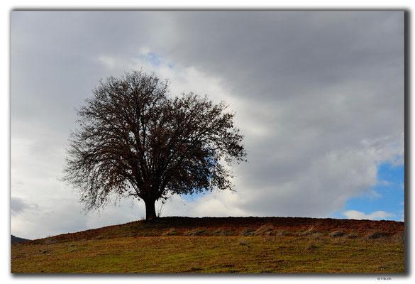TR0091.Baum auf Hügel