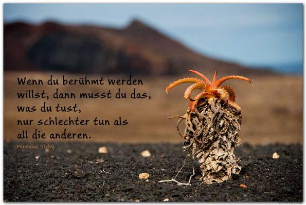 S0181.Kaktus.Lanzarote.ES. Text: Miroslav Tichy