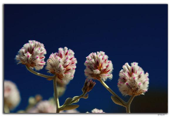 AU0415.Violeter Busch