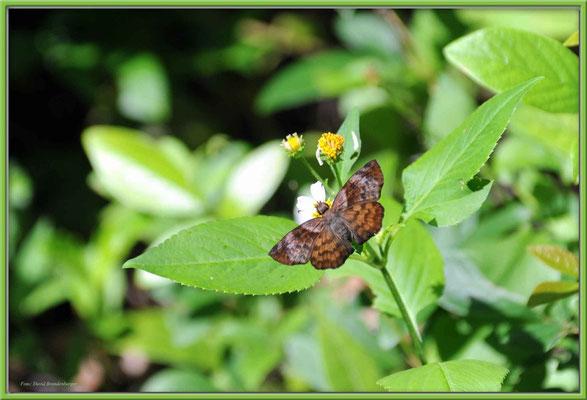 JM014 Schmetterling