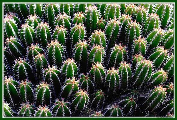 LAN021 Jardin de Cactus