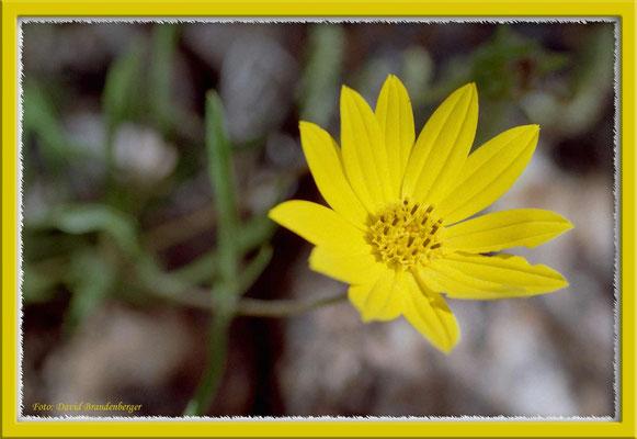 A0234.Blume.Fuente del Puma.UY