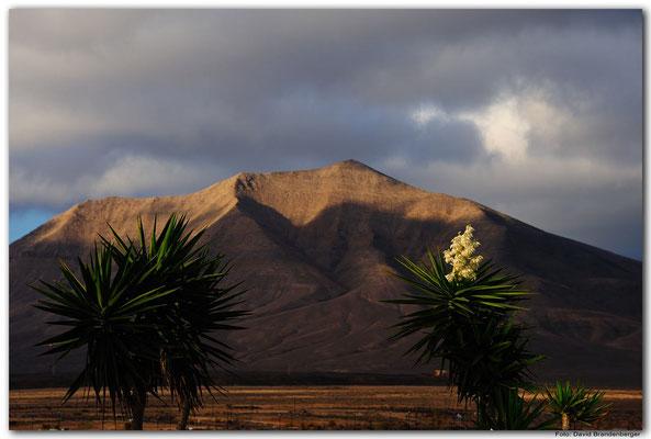 LAN091. Playa Blanca