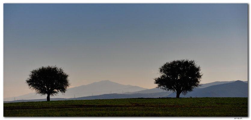 GR0078.Bäume