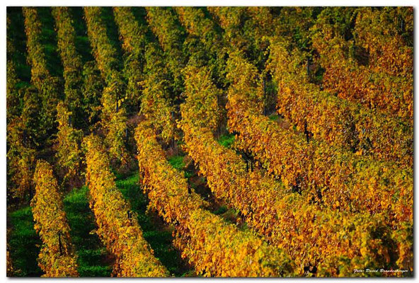 A0730.Chexbres Weinberge.CH