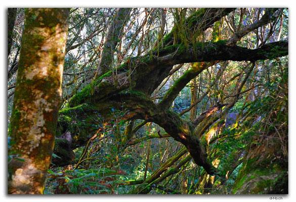 AU1475.Bemm River Rainforest Walk