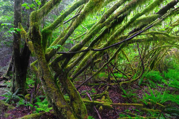 CA0138 Squamish Regenwald