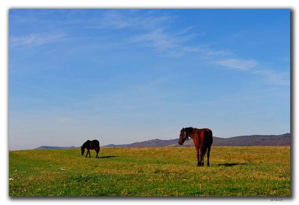 RO0132.Pferde