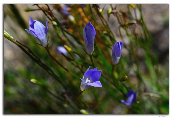 AU0951.Nullarbor N.P.Blume
