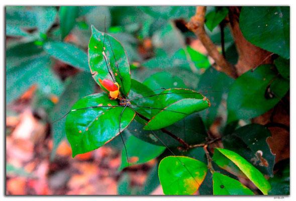 VN0090.Phong Nha.Biopark.Spinne