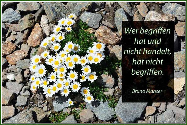 S0161.Alpen-Margerite.CH.Text: Bruno Manser