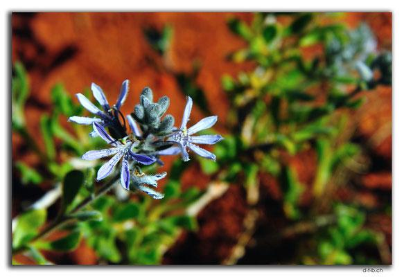 AU0359.Blume