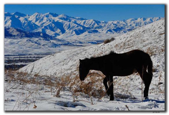 KG0037.Bishkek.Kyrgyz Ala Too und Pferde