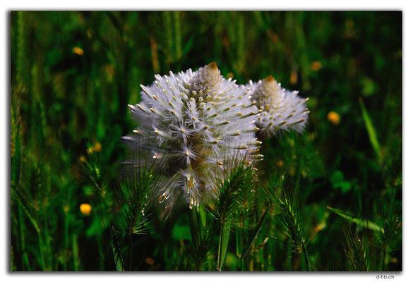 AU0421.Murchison River.Galena.Blume