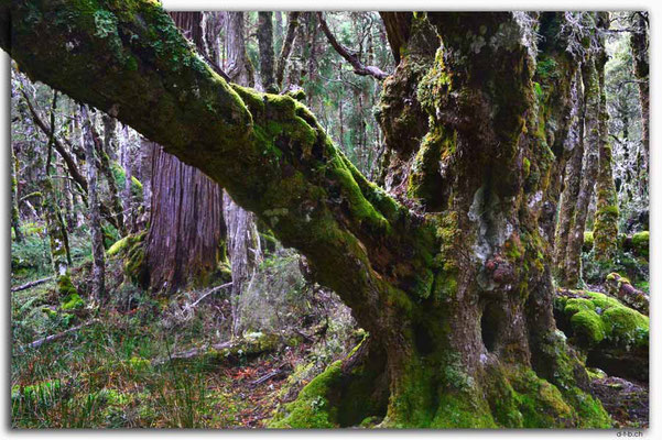 AU1371.Overland Track.Baum