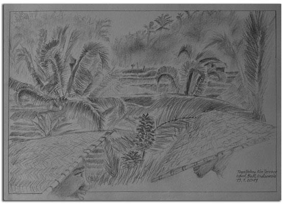 204.Skizze.Tegallalang Rice Terrace.Ubud.Bali.Indonesia