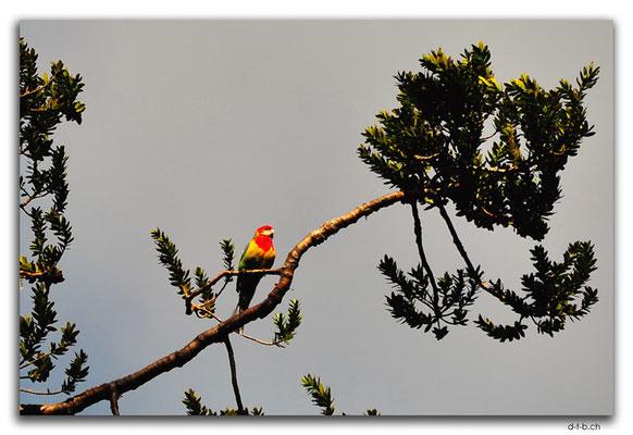 NZ0078.Parrot