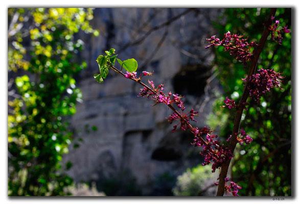 TR0705.Ihlara Valley.Blüten