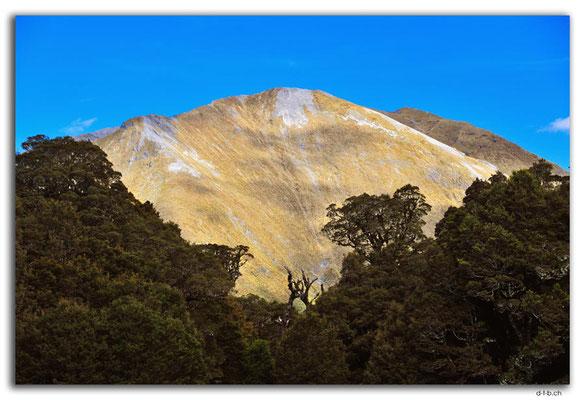 NZ0520.Kahurangi N.P.Mt. Arthur