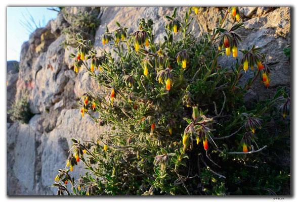 TR0224.Xanthos.Blumen