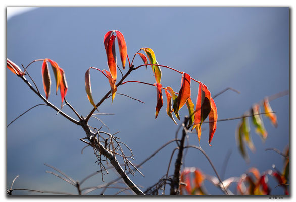 HK0096.Lamma Island.Blätter