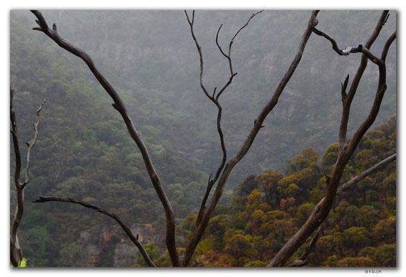 AU1107.Adelaide.Morialta Falls.Tal im Nebel