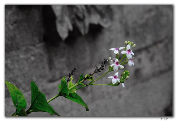 ID0014.Denpasar.Bali Museum.Blume